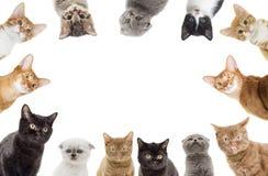 Смешной peeking котят Стоковые Изображения