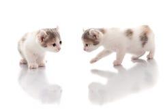Смешные котята Стоковое Фото