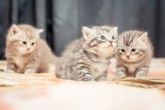 Смешные котята Стоковая Фотография