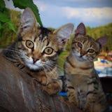 Смешные котята Стоковая Фотография RF