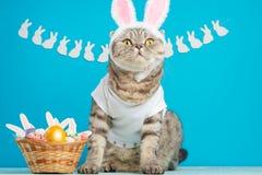 Смешные кот зайчика пасхи, милый с ушами и пасхальными яйцами Предпосылка и состав пасхи стоковое изображение rf