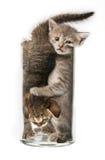 Смешные маленькие котята Стоковые Изображения RF