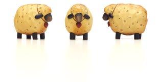 смешные модельные овцы Стоковая Фотография RF
