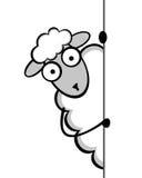 Смешные молодые овцы Стоковая Фотография RF