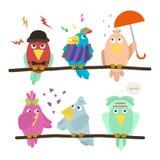 Смешные птицы смайлика сидя на ветви Комплект шаржа смешных красочных милых птиц Каждая птица на его слое с ветвью Стоковая Фотография