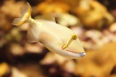 Смешные рыбы Стоковое Изображение RF