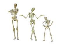 смешные скелеты Стоковые Изображения