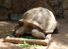 Смешные смотря черепахи Стоковые Изображения