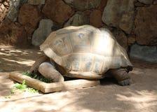 Смешные смотря черепахи Стоковое Фото