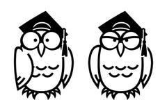 Смешные сычи в квадратных академичных крышках Иллюстрация штока