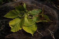 Смешные украшения свадьбы осени кольца золота wedding Стоковые Изображения