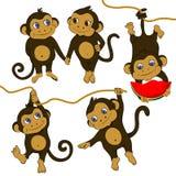 смешные установленные обезьяны Стоковые Изображения