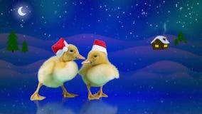 Смешные утята в красных шляпах Санты сползая на лед, предпосылку ночи зимы сток-видео