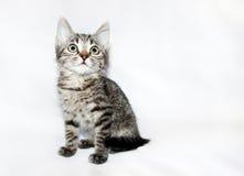 Смешным смотреть striped котенком вверх, Стоковая Фотография