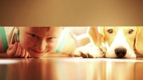 Смеясь над мальчик с его собакой бигля лучшего друга под кроватью сток-видео