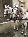 Смеясь над лошадь Стоковое Изображение RF