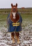 смеяться над лошади стоковые фото