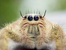 Смелейшее насекомое Стоковое Фото