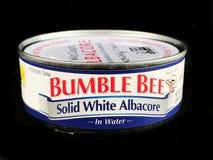 Смогите путать Albacore пчелы твердый белый в воде стоковая фотография rf