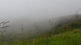 Смог или туман тумана Стоковое фото RF