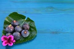 Смоквы и голубая деревянная предпосылка Стоковое Фото
