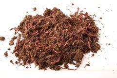 смолотые earthworms изолированными Стоковая Фотография