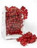 смородины красные Стоковая Фотография RF