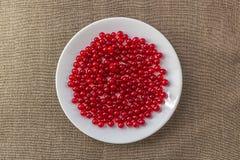 смородины покрывают красную белизну Стоковые Изображения RF