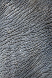 сморщенная кожа слона стоковые фотографии rf