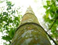 Смотреть вверх зеленый перерастанный бамбуковый хобот стоковые фото
