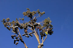 Смотреть вверх на дереве ботинка Стоковые Изображения
