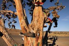 Смотреть вверх на дереве ботинка Стоковая Фотография