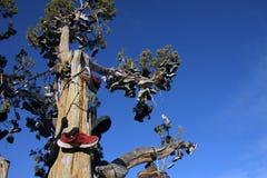Смотреть вверх на дереве ботинка Стоковое фото RF