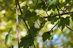 Смотреть вверх на улитке сидя на зеленых лист Стоковая Фотография