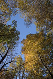 Смотреть вверх на цвете падения Стоковое Изображение