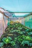 Смотреть внутри vegetable cloche в осени Стоковое фото RF