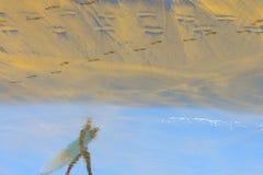 Смотреть волны Стоковое Изображение