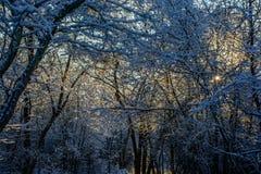 Смотреть в лес снега Стоковая Фотография