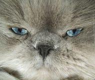смотреть глаз кота Стоковые Изображения