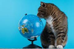 смотреть глобуса кота Красивый кот на голубой предпосылке стоковое изображение