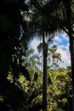 Смотреть из темного загадочного тропического леса в солнечность в расчистке и красивое голубое небо с белыми облаками стоковое фото