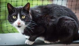 смотреть кота камеры Стоковое Изображение RF