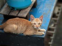 смотреть кота камеры Стоковые Фотографии RF