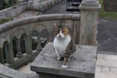 смотреть кота камеры стоковые изображения