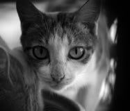 смотреть кота камеры Стоковое фото RF