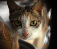 смотреть кота камеры Стоковые Изображения RF