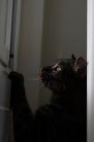 смотреть кота Стоковые Фото