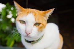 Смотреть кота Стоковое Фото