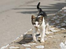 смотреть кошачьей еды бездомный Стоковые Изображения RF