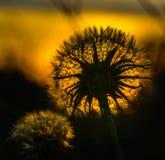 Смотреть к солнцу Стоковое Изображение RF
